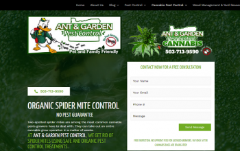 What Are Spider Mites? How To Eradicate Them?